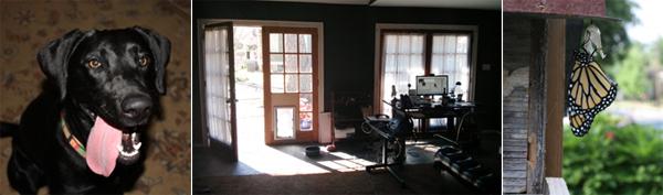 Gwen-Office-Doors-Butterfly